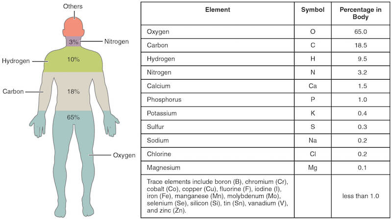 Image-1-Elements-of-the-Human-Body.jpg